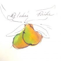 two yellow green pears on a tree branch