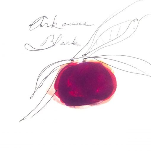 one dark red and maroon colored apple on a tree branch