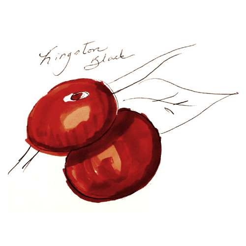 two dark red colored apples on a tree branch