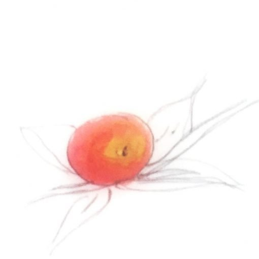 one red colored apple one a tree branch with leaves